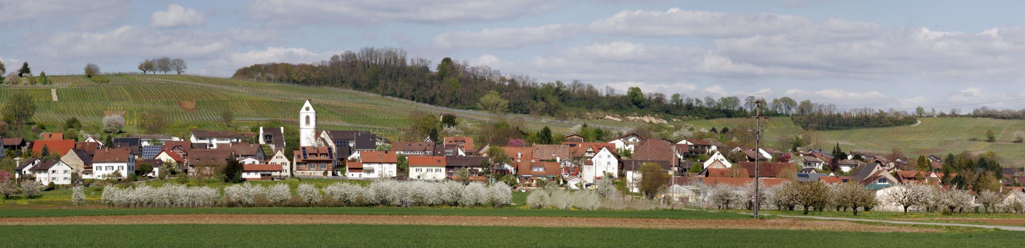 Fischingen im April 2015